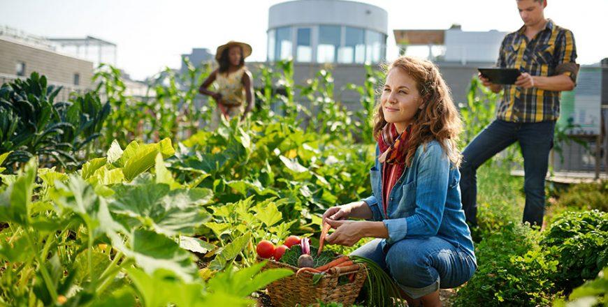 Start Your Own Edible Garden (Self-Paced Tutorial)