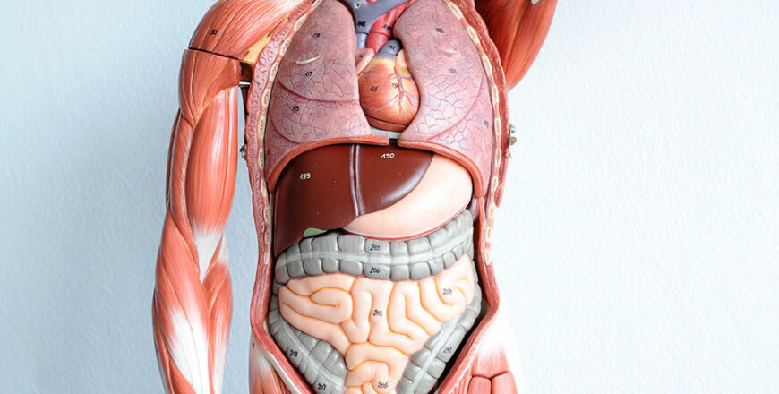 Human Anatomy and Physiology (Self-Paced Tutorial)